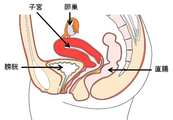 腫瘍 卵巣
